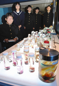 透明標本を28日から来場者に披露する碧南高の科学部員たち=碧南市の碧南海浜水族館で