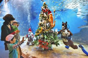 水槽内にクリスマスツリーを設置し、来場者に手を振るサンタクロースとトナカイ姿の飼育員=坂井市の越前松島水族館で
