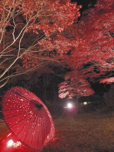 ライトアップされた紅葉と和傘の競演=飯田市の野底山森林公園で