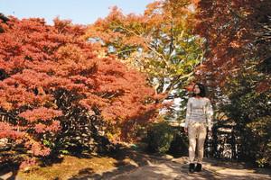 赤く色づいたドウダンツツジ=尾張旭市霞ケ丘町のどうだん亭で