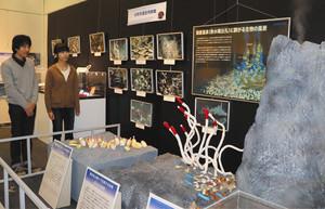 海底温泉(熱水噴出孔)に群生する深海生物のジオラマ=富山市西中野町で