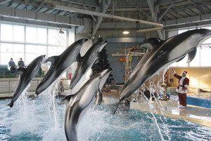 サンタ姿の飼育員の合図でジャンプするイルカ=石川県七尾市ののとじま水族館で