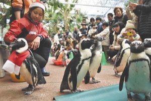 来館者の目の前を行進するペンギン=伊勢市二見町江の伊勢シーパラダイスで