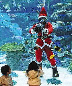 オーストラリアの海に生きる魚たちを紹介するサンタダイバー=名古屋市港区の名古屋港水族館で