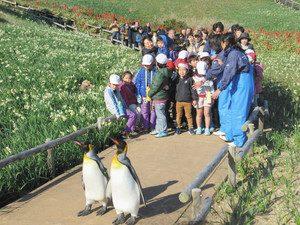 スイセンが咲く遊歩道をパレードするペンギン=下田市須崎の爪木崎水仙園で