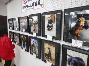 表情豊かな犬の写真が並ぶ会場=飯田市の松沢カメラで