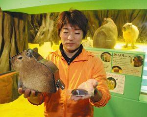 新作のお土産「カピバラの落とし物」を手にする小林館長=蒲郡市竹島水族館で
