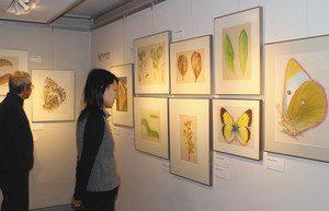 高山チョウの写真や細密画などが並ぶ作品展=安曇野市の田淵行男記念館で