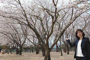 3日から無料開放する「さくら公園」=敦賀市呉羽町の東洋紡で