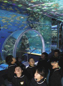 プロジェクションマッピングと水槽の魚に見入る保育園児=七尾市ののとじま水族館で