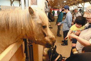 厩舎で馬と触れ合う人たち=近江八幡市加茂町で