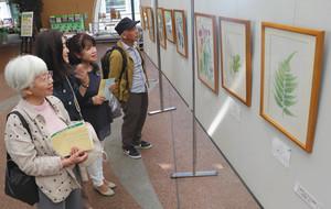 細部まで特徴を描いた植物画が並ぶ会場=県中央植物園で