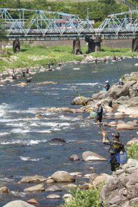 アユの友釣りを楽しむ人たち=郡上市八幡町の吉田川で