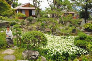 見頃を迎えた庭園のハンゲショウ。左後方の建物は茶室=守山市赤野井町で