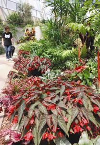 鮮やかな色の花々や葉がスロープ沿いを彩る温室内=可児市の花フェスタ記念公園で