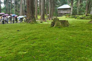 雨が降る中、境内を鮮やかに彩るコケ=勝山市の白山平泉寺旧境内で