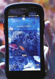 魚類の画像から種類を判別するアプリ=鳥羽市鳥羽3の鳥羽水族館で(同水族館提供)