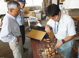 地域の人から持ち込まれたマツタケを選別するJA上伊那東伊那支所の担当者(右)=駒ケ根市で