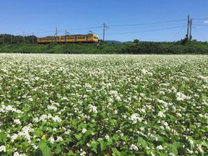 一面に咲いたソバの花=いなべ市大安町で(市提供)