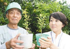 昨年まいた種から育てた国造ゆずの苗=能美市和気町のゆず団地で