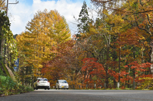 見頃を迎えたせせらぎ街道の木々=高山市清見町で