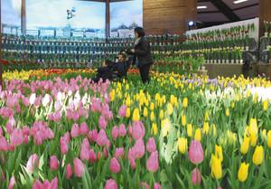 チューリップが咲き誇る会場を歩く親子連れ=安曇野市の国営アルプスあづみの公園で