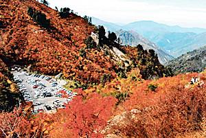 紅葉真っ盛りの白山スーパー林道の最高地「三方岩駐車場」