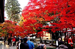 紅葉真っ盛りの永源寺の境内