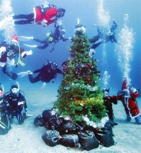 ツリーの周りでクリスマス気分を味わうダイバーら=伊東市の伊豆海洋公園で(由木直子撮影)