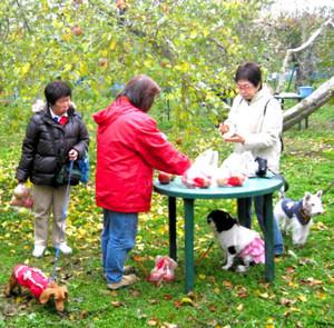 わんちゃんと一緒にリンゴ狩り