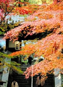 境内を色鮮やかに染めるモミジ=4日午後、袋井市村松の油山寺で(袴田貴資撮影)