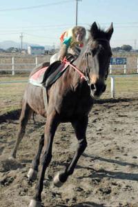 息もぴったりに疾走する馬とサルのコンビ=伊勢市有滝町で
