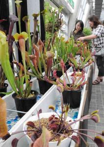 不思議な姿で来園者を楽しませる食虫植物=安城市のデンパークで