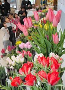 色とりどりの高岡産チューリップの切り花=高岡市の大和高岡店で