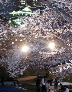 岡崎城天守閣をバックに夜間照明で浮かび上がる夜桜=岡崎市で