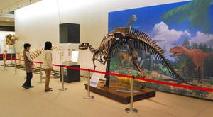 恐竜の全身骨格などが展示される会場=小浜市の県立若狭歴史民俗資料館で