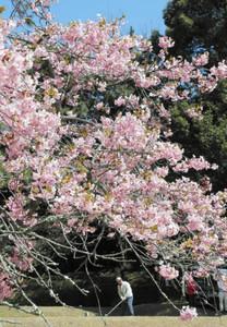 咲き誇る花々の中プレーを楽しむゴルファー=幸田町の葵カントリークラブで