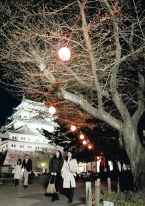 つぼみが膨らみ始め、ライトアップされ夜空に浮かび上がる桜=中区の名古屋城で