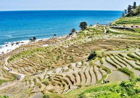 日本海とのコントラストが美しい白米千枚田