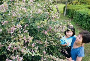 見ごろを迎えたハギの花を楽しむ来園者=伊賀市柘植町の余野公園で