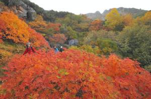 見頃を迎え、山を鮮やかに彩る紅葉=木曽町で