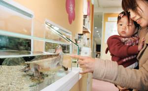 人に興味を持って寄ってくるヘビクビガメ科のカメ=名古屋市港区の名古屋港水族館で