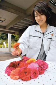 ラナンキュラスの花を挿し、切り花アートの展示方法を考える東海市職員=市農業センターで