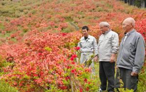 ヤマツツジで赤く染まった斜面を見て喜ぶ小倉会長(中)ら=大紀町崎で