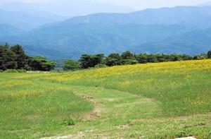 草を刈り込んで設けたクロスカントリーコース=金沢市小豆沢町のキゴ山ふれあいの里で