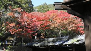 見頃を迎えている普門寺の紅葉=豊橋市雲谷町で