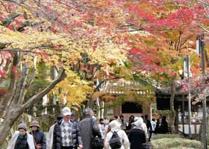 色づく木々に囲まれた参道に詰め掛ける観光客=愛荘町の金剛輪寺で