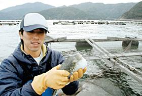 恵まれた自然環境の中で養殖されている「若狭ふぐ」=福井県小浜市阿納の若狭湾で