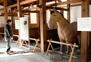 21頭の馬を収容していたという馬屋の内部=彦根市金亀町で