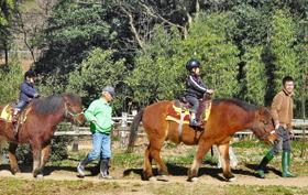 木曽馬の乗馬体験を楽しむ子ども=西尾市鳥羽町の「吉良の赤馬牧場」で